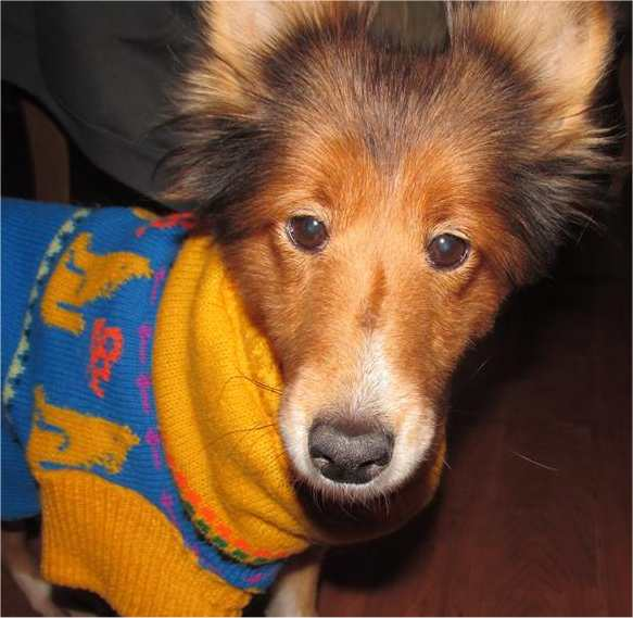 Hearts Promise Sheltie Rescue Home
